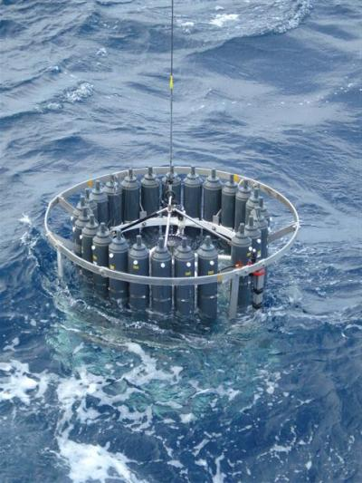 A New View of Oceanic Phytoplankton