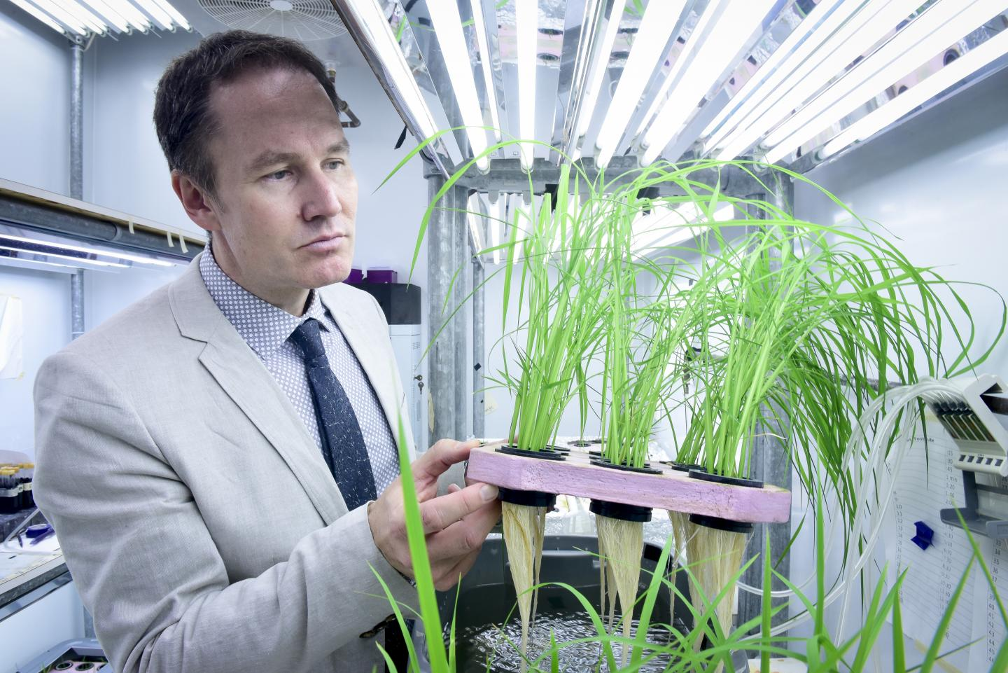 Identifying Rice Crops That Can Save Farmers Money and Cut Pollution