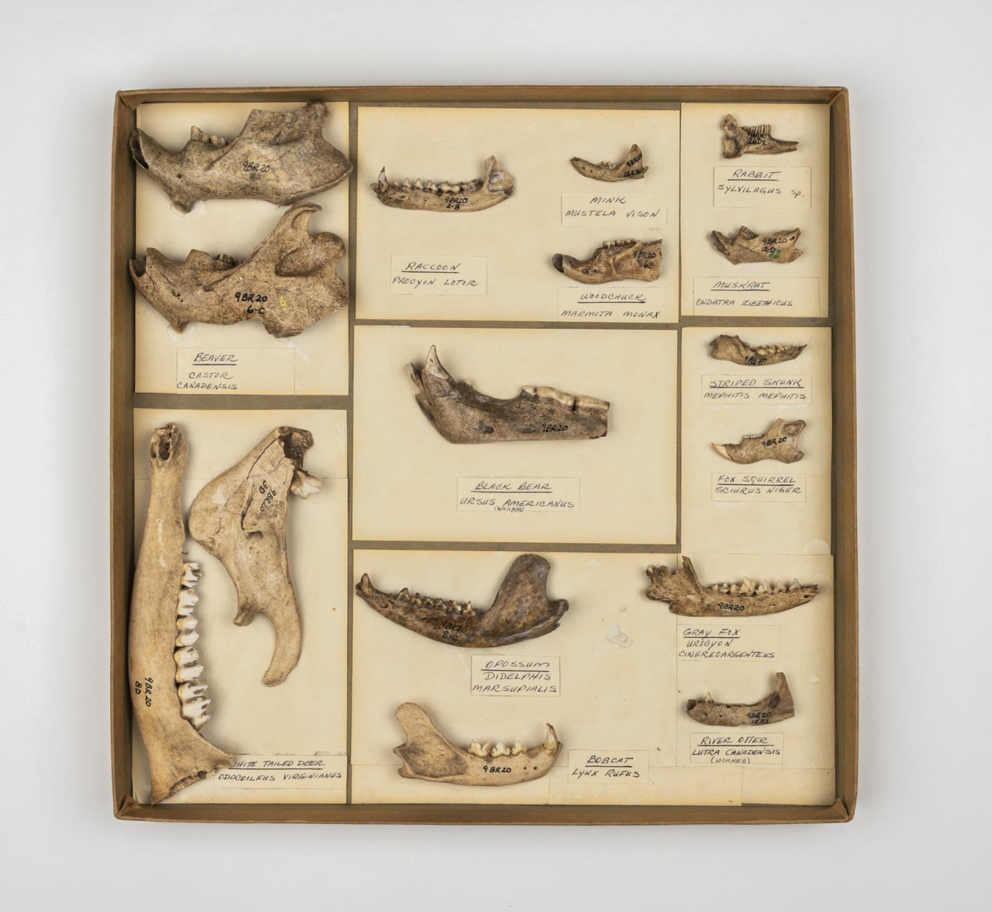 Specimens Reveal Humans' History of Using Natural Resources