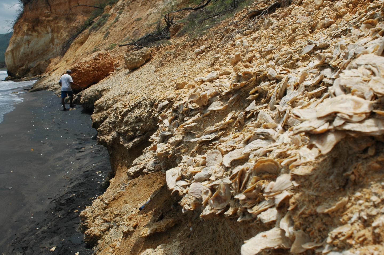 Exposures of Pleistocene sediments