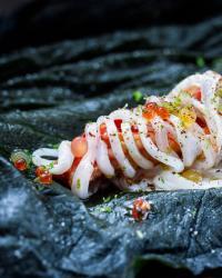 <i>Loligo forbesii</i> With Lobster
