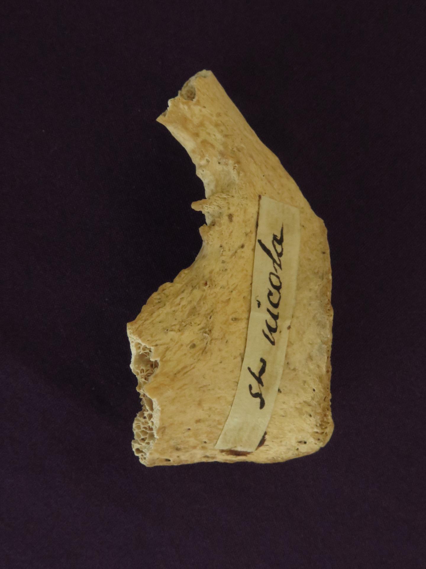 Relic of St. Nicholas (Pelvis Fragment)