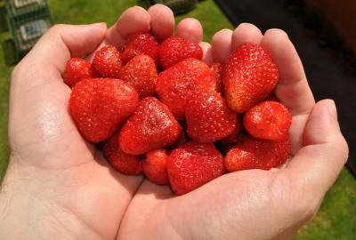 Strawberry Extract Protects against UVA Rays