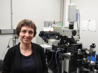 Natalia Drichko, Johns Hopkins University