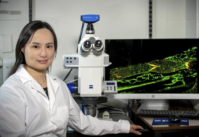 Ying Yang, PhD