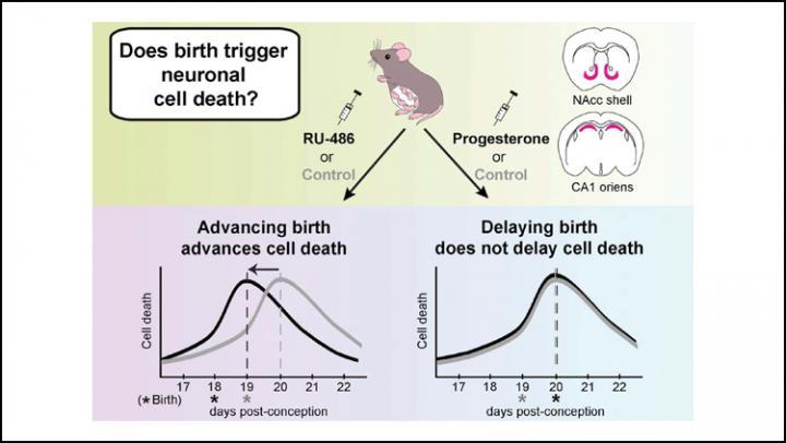 Birth Timing May Affect Brain Development