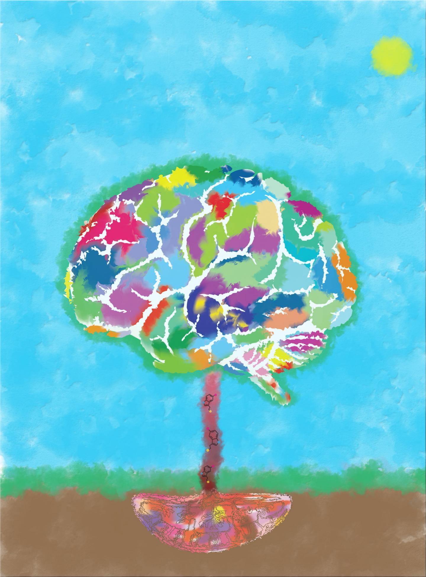 Serotonin as a Brain Growth Factor