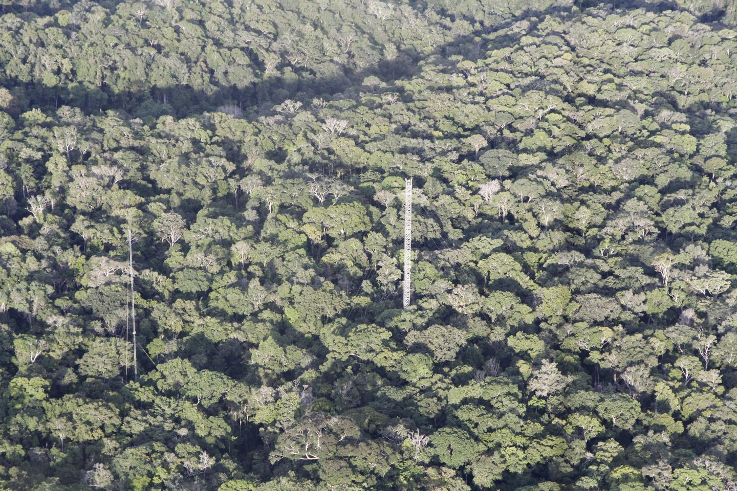 The Amazon Rainforest at the Amazon Tall Tower Observatory Site