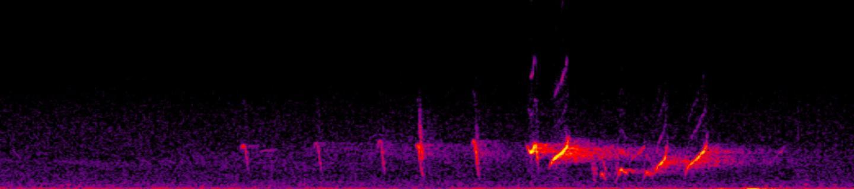 Spectrogram of Honeyeater