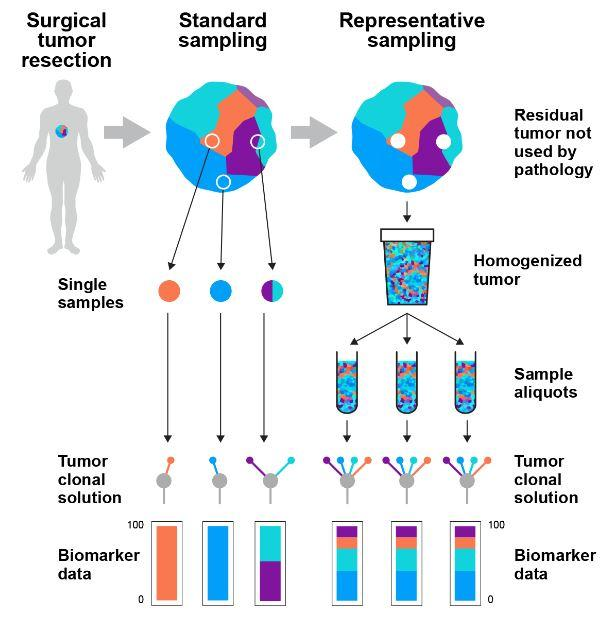 cancer genetic news)