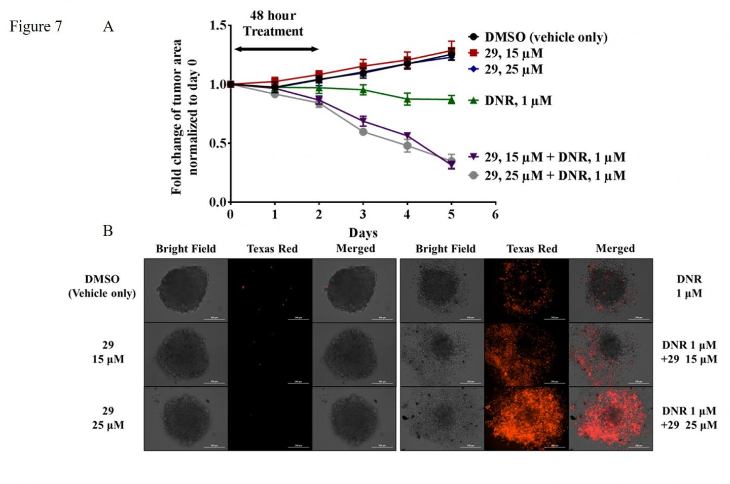 Advanced Cancer Cells Die after Chemo + Inhibitor