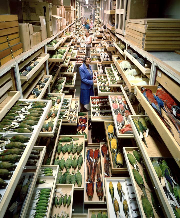 Smithsonian Bird Collection