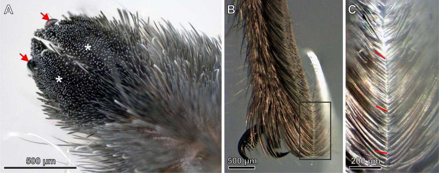 Microscope images of hairs