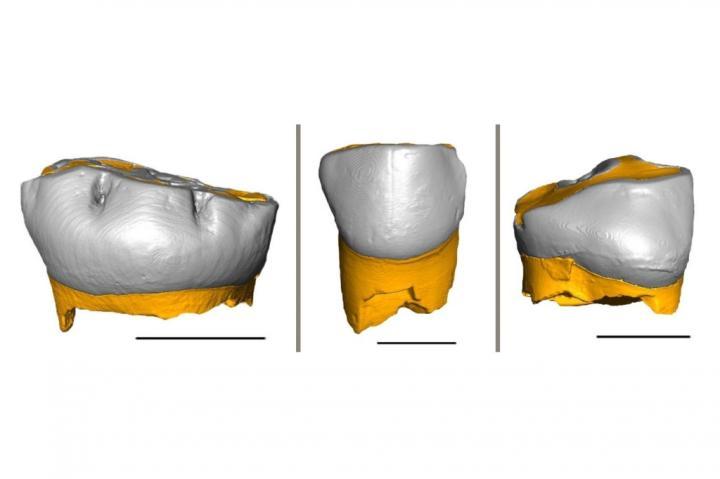 3D Reconstruction Of The Three Neanderthal Milk Teeth Analyzed