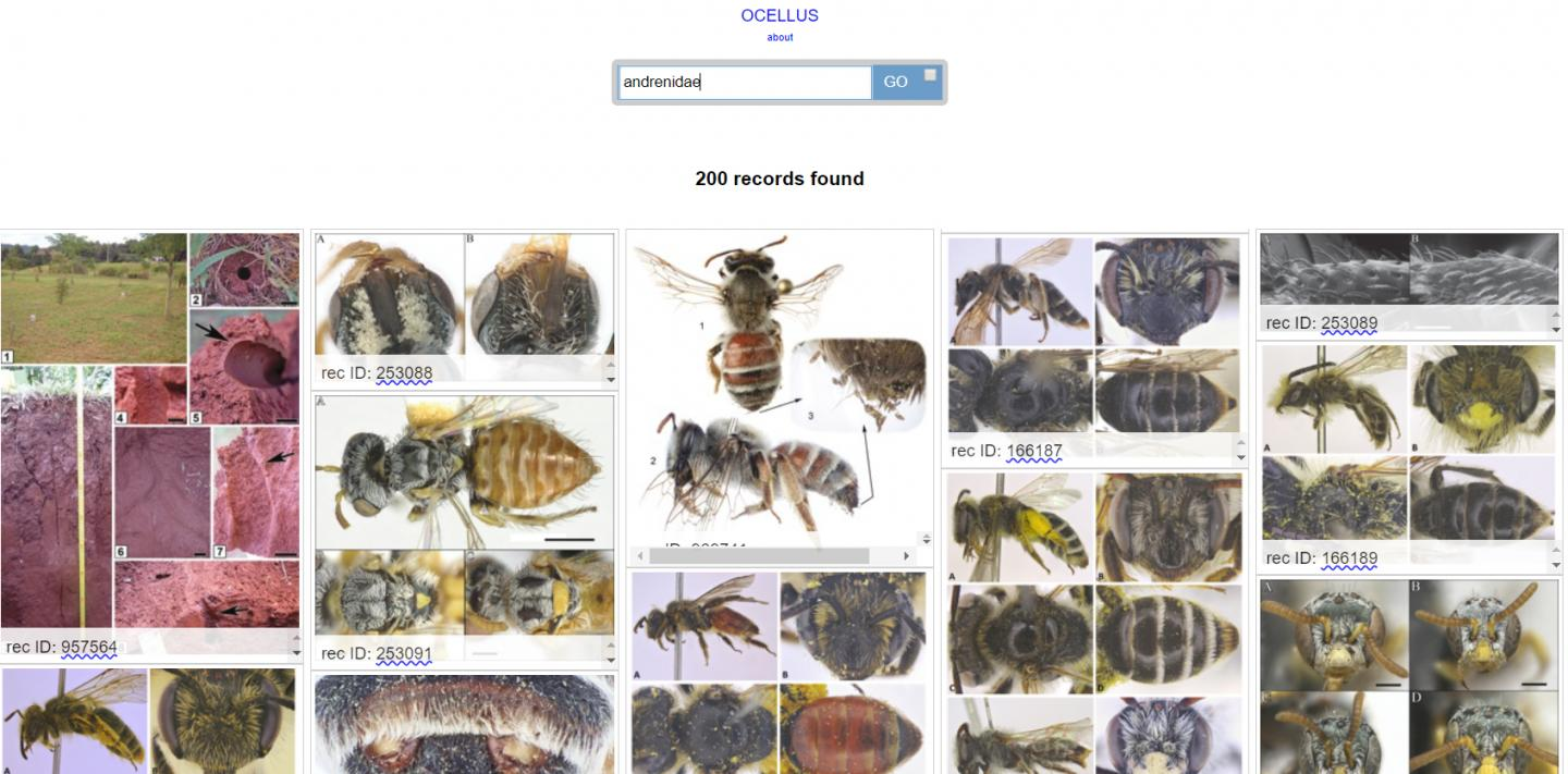 Visual Search Results from the Biodiversity Literature Repository