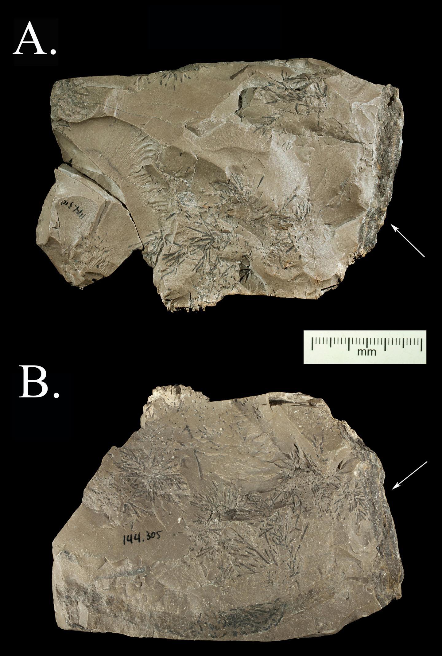 Krapina Rock (2 of 2)