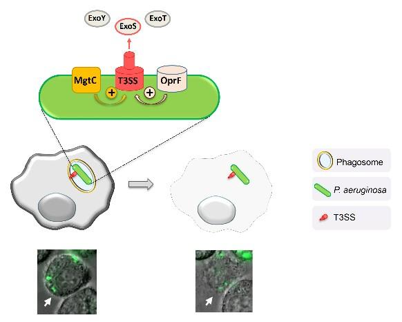 How Bacteria Kill Host Cells from the Inside