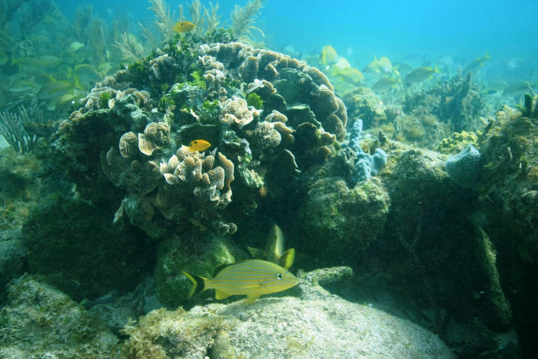 Coral Reef Near Ojos