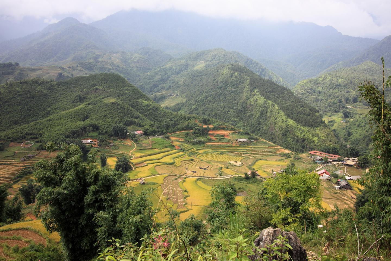 Rice Terraces in Sapa in Vietnam