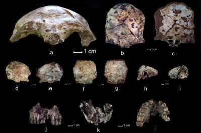 Old Modern Skull