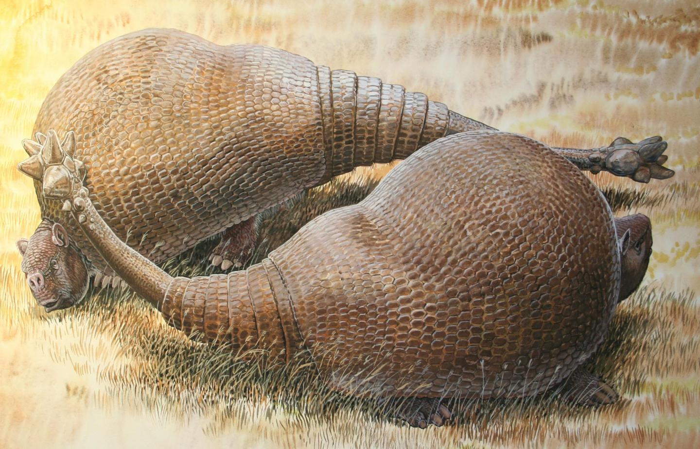Glyptodonts
