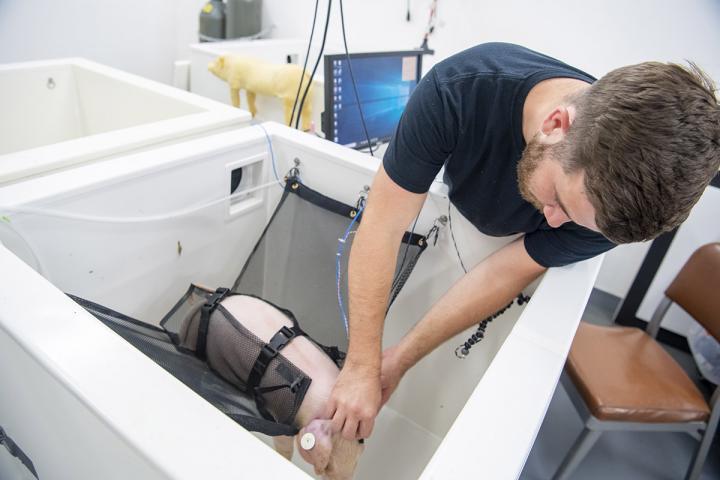 Adam Jones sets piglet in testing equipment