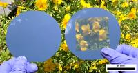 Opaque and Transparent Solar Cells