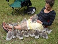 With Goslings