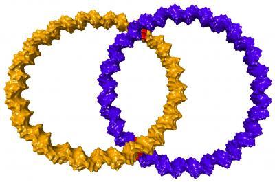 DNA-Catenan
