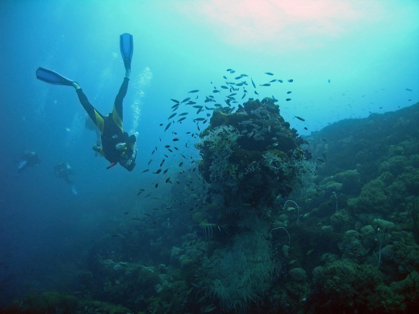 Australia's Great Barrier Reef Is One of the World's Most Popular Tourist Sites