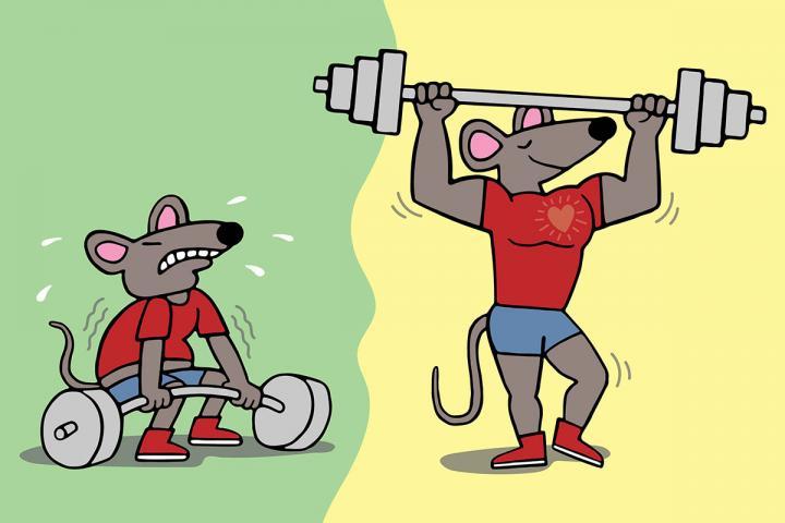 Super Mice