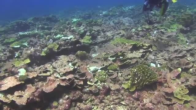 New Coral Bleaching Database to Help Predict Fate of Global Reefs