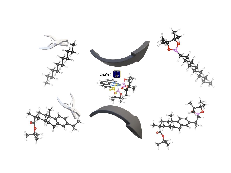 C-H activation by an iridium catalyst