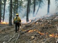 Prescribed Burn in Northern California