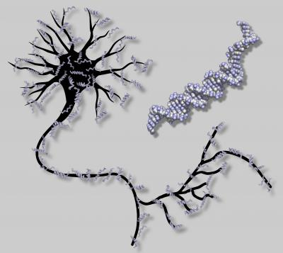 A DNA-based Artificial Neural Network