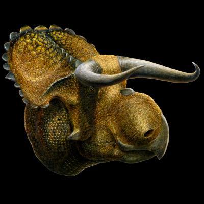 <i>Nasutoceratops</i>