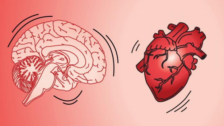 The brain jiggles when the heart beats