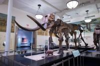 Museum mastodon 2