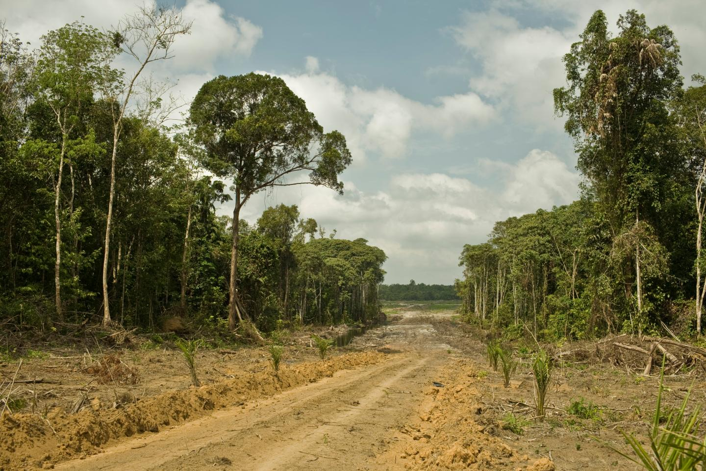 Road for Oil Palm Plantation