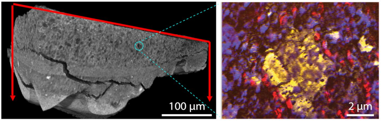 Microscopic and Nanoscale Details