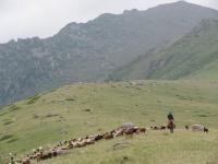 Herding Sheep and Goat in the Dzhungar Mountains of Kazakhstan c. 2011