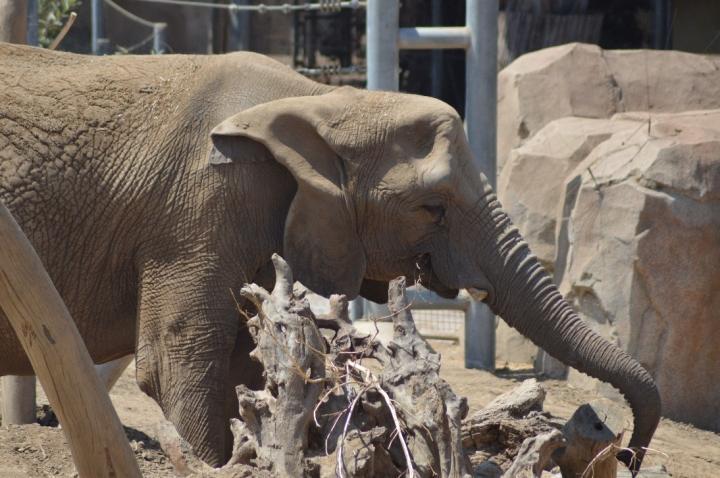 Elephant problem solving