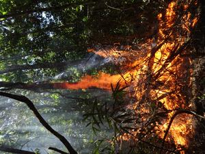 Burning tree in the Amazonian rainforest