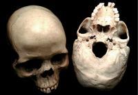Smarter Brains Are Bloodthirsty Brains