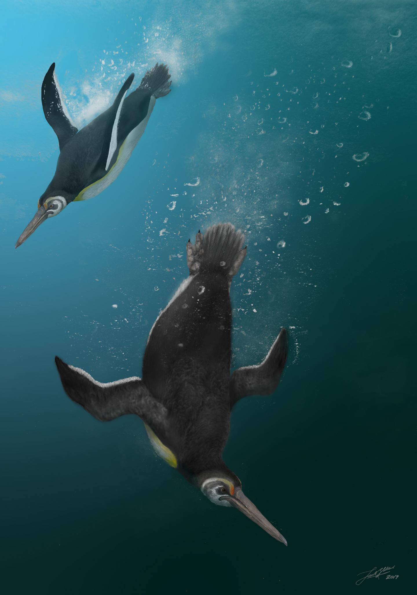 When Penguins Rules the Waves