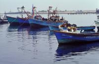 Coastal Peru