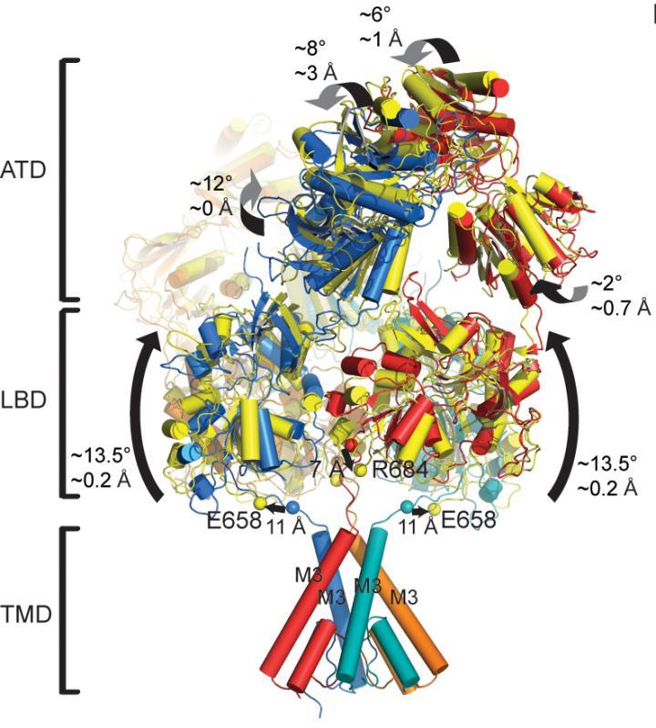 NMDA Receptor in Motion