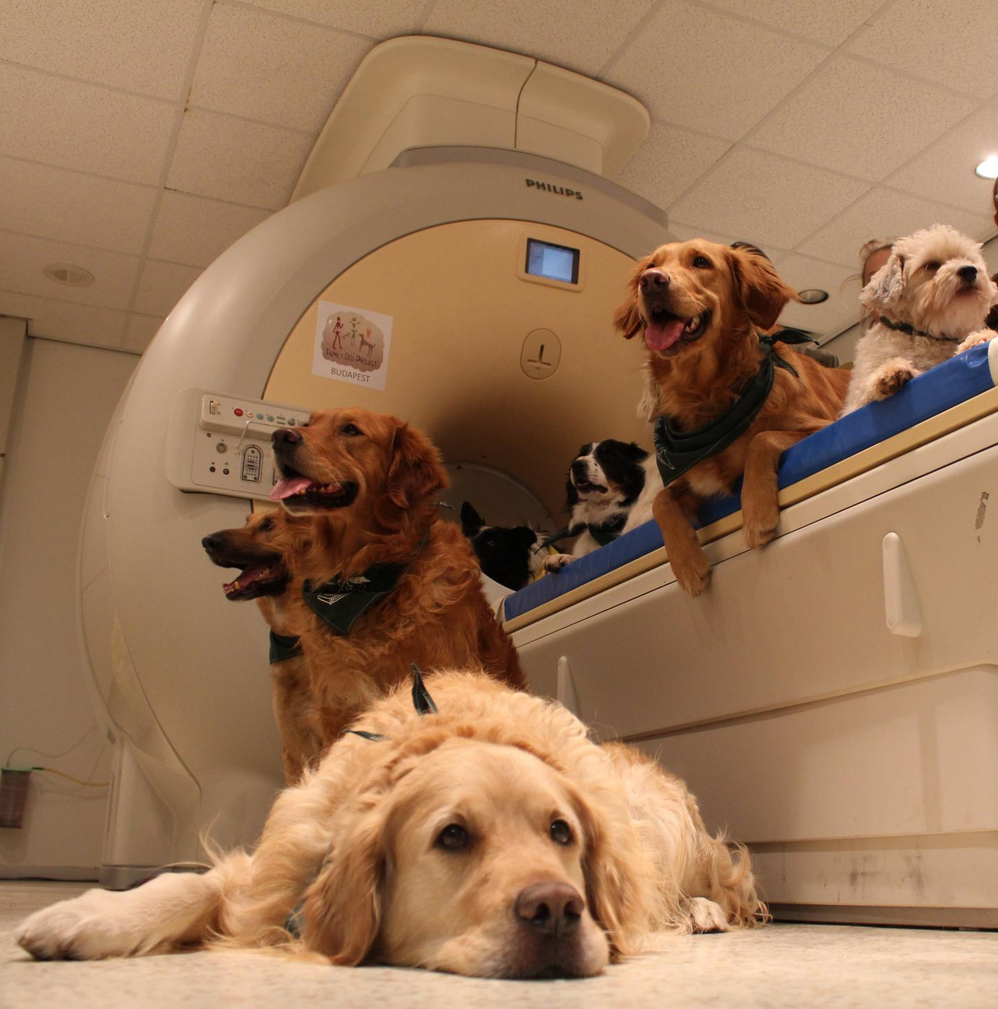 Dogs in and on and near the fMRI