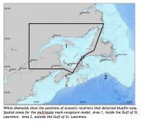 An 'Easypass' Tollbooth System for Giant Bluefin Tuna