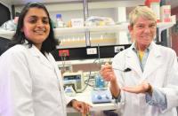 Microalgae research at Flinders University